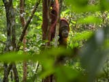 Fakta-fakta tentang Taman Nasional Betung Kerihun di Kalimantan