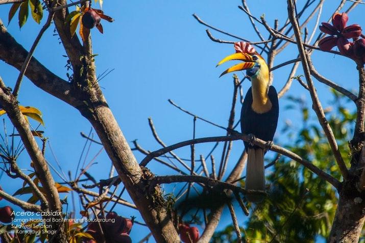 Empat Dekade Penelitian, 457 Burung Dinyatakan Sebagai Spesies Baru