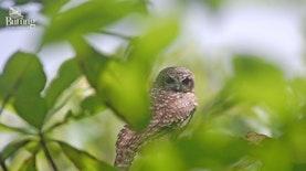 Inilah Jumlah Jenis Burung yang di Indonesia