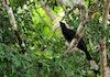 Foto: Rangkong, Burung Sakti Penebar Biji