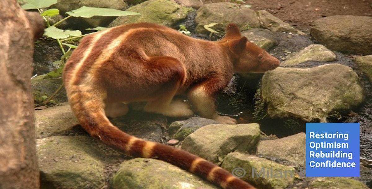 Ternyata kanguru bukan hanya ada di Australia, melainkan Indonesia juga punya!