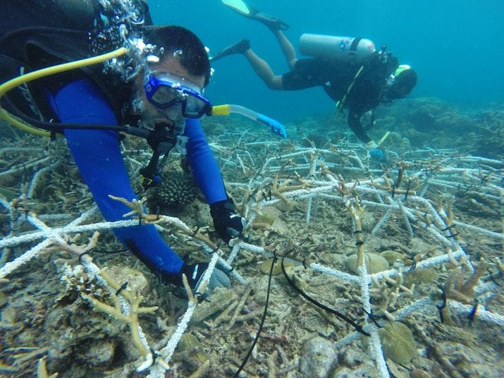 Cerita Membangun 'Surga Karang' di Pulau Bontosua