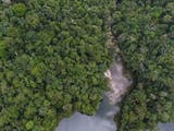 Gambar sampul Disinilah Populasi Orangutan Tapanuli Banyak Ditemukan