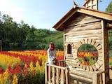 Bunga Khas Eropa Ini Mempercantik Kabupaten Gunungkidul