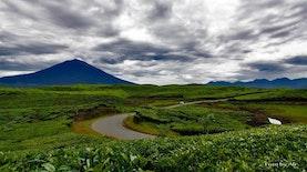 Teh Organik Indonesia yang Mencuri Perhatian Dunia