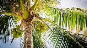 Pohon Terkuat di Indonesia yang Kaya Manfaat