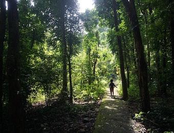 Jelajah Hutan Bersama Anak-anak di Taman Wisata Alam Kerandangan