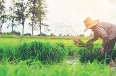 Lindungi Petani dan Peternak, Asuransi Pertanian Serentak Diterapkan Tahun 2021