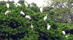 Burung Ini Setia untuk Kunjungi Pulau Rambut