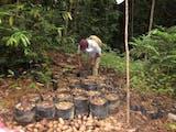 Gambar sampul Komunitas Adat di Kalimantan Timur Raih Penghargaan PBB