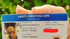 Identitas Anjing, Tanggung Jawab yang Harus Disadari Para Pemilik Hewan