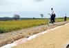 Lompatan Nilai Ketahanan Pangan Indonesia Tertinggi di Dunia
