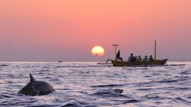 Perairan di Indonesia dengan Kemunculan Lumba-Lumba (Bagian II)
