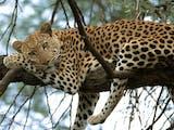 Gambar sampul Menyambut 30 Satwa Afrika di Kebun Binatang Gembira Loka