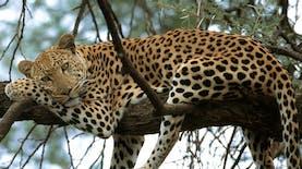 Menyambut 30 Satwa Afrika di Kebun Binatang Gembira Loka