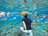 Gambar sampul Destinasi Ini Cocok Untuk Kalian yang Ingin Menyelam Bersama Ikan Tapi Takut Kedalaman Laut