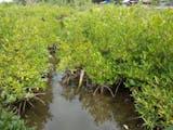 Gambar sampul Desa Apar Kota Pariaman, Berwawasan Lingkungan dan Edukasi Ekosistem Pesisir