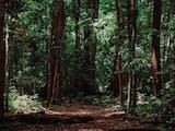 Gambar sampul Misi Ekspedisi Bumi Cenderawasih Mapala UI, Upaya Temukan Kekayaan Hayati Papua Barat