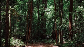 Misi Ekspedisi Bumi Cenderawasih Mapala UI, Upaya Temukan Kekayaan Hayati Papua Barat