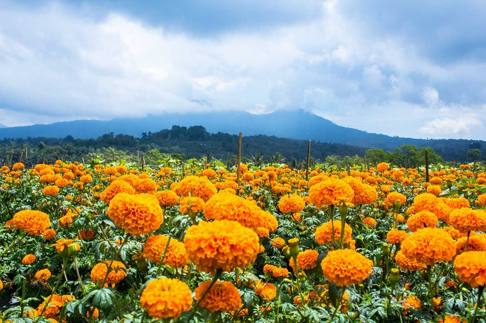 Download 850+ Background Pemandangan Bali HD Terbaik