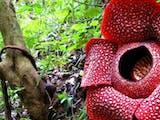 Gambar sampul Indonesia Rumah Keanekaragaman Hayati