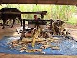 Gambar sampul Gula 'Saka' Khas Nagari Lawang: Pakai Tenaga Kerbau hingga Obyek Wisata