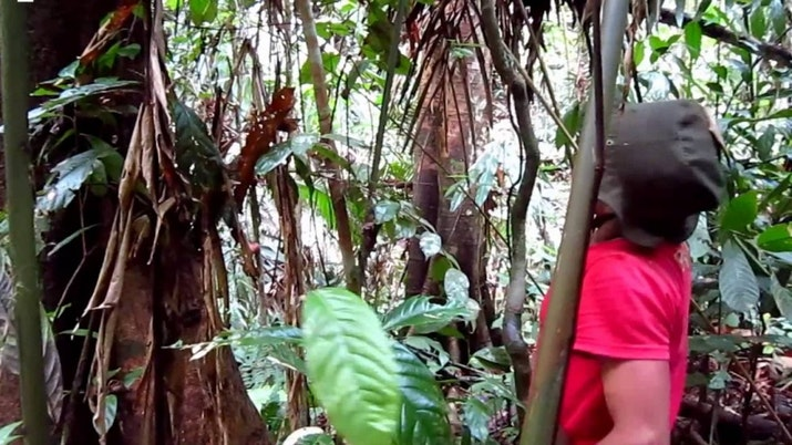 Mulai Langka di Hutan, Suku Anak Dalam Budidaya Jernang
