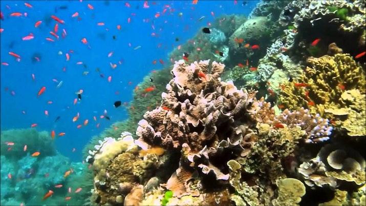 Mari Menengok Keadaan Terumbu Karang Indonesia
