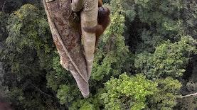 Menakjubkan! Foto dari Daratan Kalimantan Ini Menangkan Kontes Foto Tingkat Dunia