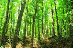 Inilah 5 Daerah dengan Hutan Terluas di Indonesia