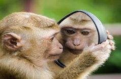 Kera dan Monyet, Bedanya Apa Sih?