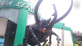 Potret Kumbang Tanduk, Ikon Museum Serangga
