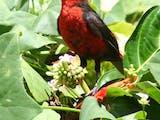 Gambar sampul Wow LIPI menemukan Spesies Baru di Pulau Rote