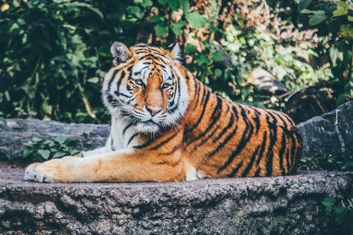 Yuk Kenalan Sama 4 Fauna Khas Indonesia Ini!