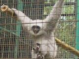 Gambar sampul Tidak Banyak Yang Tahu, Primata Unik Ini Ternyata Hanya ada di Pulau Jawa
