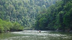 Rimbang Baling, Oase Bagi Spesies yang Terancam