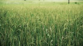 SI MANTAP, Teknologi Baru Untuk Pertanian Indonesia Yang Lebih Efisien