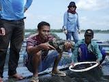 Bangkitkan Perekonomian Masyarakat Sumberwaru Melalui Budidaya Ikan Kerapu