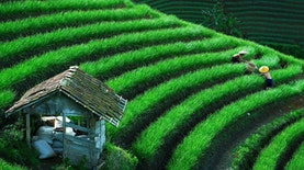 Inilah Tiga Desa Paling Sejuk di Indonesia