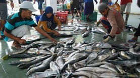 Industri Pengalengan Ikan Tumbuh Positif di Tengah Pandemi Covid-19