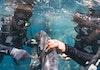 Uniknya Pola Pergerakan Hiu Paus di Teluk Saleh dan Teluk Triton