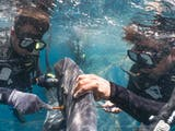 Gambar sampul Uniknya Pola Pergerakan Hiu Paus di Teluk Saleh dan Teluk Triton