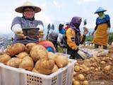 Gambar sampul Golden Agrihorti Inovasi Kentang Balitbangtan untuk Industri Pangan