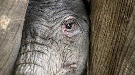 Dumbo Sang Penghuni Baru Batu Secret Zoo