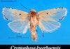 Penemuan 3 Jenis Ngengat Baru dari Indonesia Timur