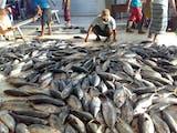 Gambar sampul 143 Juta Dolar AS Produk Perikanan Indonesia Akan Diekspor ke Korea!
