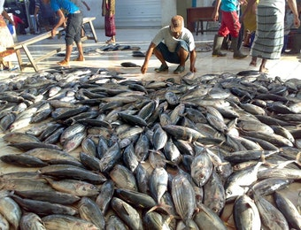 143 Juta Dolar AS Produk Perikanan Indonesia Akan Diekspor ke Korea!