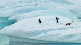 Pertama Kali! Indonesia Kirim Dua Peneliti terbaik ke Antartika