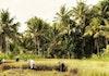 Laris Manis Produk Pertanian Indonesia di Dunia