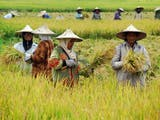 Cara Petani Mengerem Perubahan Iklim